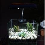 Terrarium SET Cactus 7.5 นิ้ว
