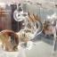 """ของที่ระลึกไทย แก้วเป่าทองตู้กระจกลวดลายช้าง ขนาด 3"""" 4"""" 6"""" 8"""" 11"""" 12"""" 16"""" 18"""" 24"""" thumbnail 3"""