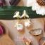 Pupa gang Thai dessert : Kleeb lumduan (กลีบลำดวน) thumbnail 1