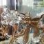 """ของที่ระลึกไทย แก้วเป่าทองตู้กระจกลวดลายมังกร ขนาด 3"""" 4"""" 6"""" 8"""" 11"""" 12"""" 16"""" 18"""" 24"""" thumbnail 2"""