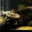 diamondback terrapin turtle thumbnail 4