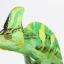 Veiled Chameleon เวลล์ คามิเลียน thumbnail 3