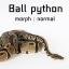ball python งูบอล thumbnail 1
