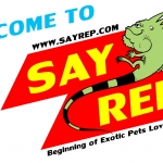 SayRep.com คือใคร? ทำไมต้อง SayRep.com?