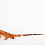 Exotic Pets สัตว์แปลก กับความเข้าใจผิดๆ