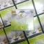 GOLD Ginseng Lemon CREAM By jeezz ครีมโสมมะนาวทองคำ ครีมกันแดดและไนท์ครีม เพื่อผิวกระจ่างใส ลดริ้วรอย thumbnail 10