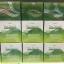 Verena The Secret Wheatgrass Chlorophyll เวอรีน่า เดอะซีเครท วีทกราส คลอโรฟิลล์ thumbnail 8