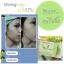 Shining Soap ไชน์นิ่งโซพ สบู่สเต็มเซลล์ สร้างเซลล์ผิวใหม่ ให้ผิวดูขาวใส thumbnail 11