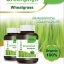 Neriis Greenphyll Wheatgrass เณรี่ส์ กรีนฟิล วีทกราส thumbnail 2