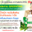 Greentina Plus กรีนติน่า พลัส ลดน้ำหนัก กระชับสัดส่วน thumbnail 6