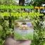 GOLD Ginseng Lemon CREAM By jeezz ครีมโสมมะนาวทองคำ ครีมกันแดดและไนท์ครีม เพื่อผิวกระจ่างใส ลดริ้วรอย thumbnail 5