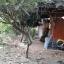 ขายบ้านพร้อมที่ดิน อำเภอท่ามะกา ต.หวายเหนียว กาญจนบุรี เนื้อที่ 154 ตร.ว. thumbnail 9