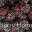 แบล๊คเบอร์รี่แช่แข็ง / Blackberry (1 กก.) thumbnail 1