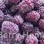 บอยเซนเบอร์รี่แช่แข็ง / Boysenberry 1 กก. thumbnail 1