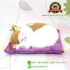 ตุ๊กตาแมวเหมือนจริงนอนหลับ สีขาวเหลือง 17x20 CM