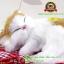 ตุ๊กตาแมวเหมือนจริงนอนหลับ สีเหลือง 14x17 CM thumbnail 8