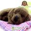 ตุ๊กตาหมาเหมือนจริงนอนหลับบนเบาะ สีน้ำตาล 25x30 CM thumbnail 5