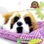 ตุ๊กตาหมาเหมือนจริงนอนหลับบนเบาะ สีเหลือง 25x30 CM thumbnail 7