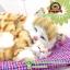 ตุ๊กตาแมวเหมือนจริงนอนหลับบนเบาะกับลูก สีเหลือง 25x30 CM thumbnail 6