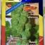 กะหล่ำดาว Brussels Sprouts (ประมาณ100เมล็ด) thumbnail 1