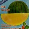 แตงโมเหลือง(12เมล็ด)