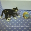 เข็มกลัด Black cat thumbnail 2